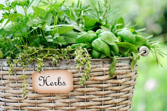 Basket with herbs Royalty Free Stock Photos