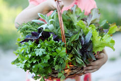 Basket with herbs. Little girl holding wicker basket with fresh herbs Stock Photo