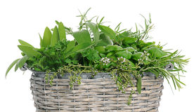 Basket with herbs royalty free stock images