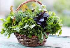Basket with herbs. Wicker basket with fresh herbs Royalty Free Stock Photos