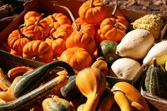 Basket of Holiday Vegetables Stock Images
