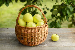 Basket of homegrown apples on wooden table Stock Image