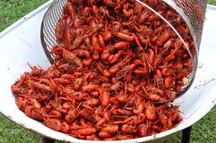 Basket Of Hot Boiled Crawfish Royalty Free Stock Photography