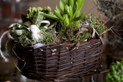Basket with hyacinth Royalty Free Stock Photography