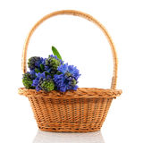 Basket with hyacinths Stock Photography