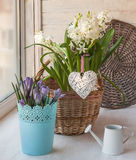 Basket with  hyacinths and crocuse and   heart Stock Photo