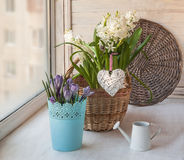 Basket with  hyacinths and crocuse and   heart Royalty Free Stock Photos