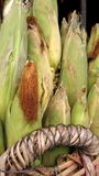 Basket if Fresh sweet corn from the field Royalty Free Stock Photos
