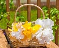 Basket with irises garden flowers Stock Photo