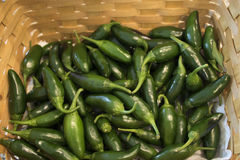 Basket of Jalapenos. Basket of green jalapenos picked fresh from the garden Royalty Free Stock Photography