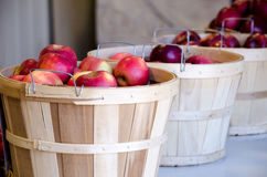 Basket of juicy red  apples Royalty Free Stock Image