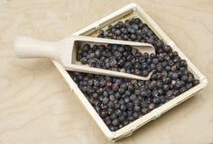 Basket with juniper berries Stock Photos