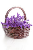 Basket of lavende Stock Image