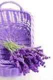Basket of lavende Stock Images