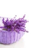 Basket of lavende Stock Photos