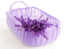 Basket of lavende Royalty Free Stock Photo