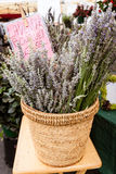Basket of lavender Royalty Free Stock Photography