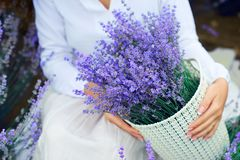 Basket with lavender flower is in woman hand stock photos