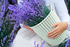 Basket with lavender flower is in woman hand stock images