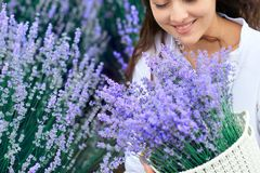 Basket with lavender flower is in woman hand royalty free stock image