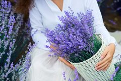 Basket with lavender flower is in woman hand royalty free stock photo