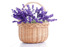 Basket of lavender Royalty Free Stock Images