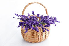 Basket of lavender Royalty Free Stock Image