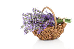 Basket with a lavender Stock Image