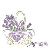 Basket with lavender Stock Photo
