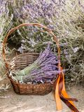 Basket with a lavender and vintage scissors, Provence, France. Basket with a lavender and vintage scissors stock image