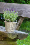 Basket of lavender on wooden bench Stock Photos