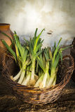 Basket of leeks in a country kitchen Stock Images