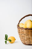 Basket of lemons Royalty Free Stock Image