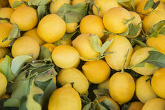 Basket of lemons Stock Photo