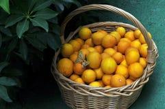 Basket of fresh lemons Royalty Free Stock Photo