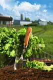 Basket of lettuce in garden royalty free stock photography