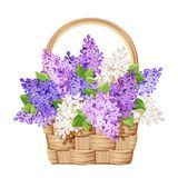 Basket with lilac flowers. Vector illustration. Stock Photography