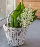 Basket with lilies of the valley (Convallaria majalis) Royalty Free Stock Image
