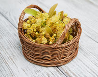 Basket with lime flowers Royalty Free Stock Image