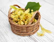 Basket with lime flowers Stock Photo