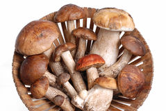 Basket with lots of mushrooms Royalty Free Stock Image