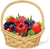 Basket of Many Berries Stock Images