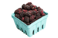 Basket of Marionberries isolated on white Royalty Free Stock Images