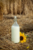 Basket with milk in haystack Royalty Free Stock Photo