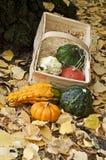 Basket with mini pumpkins. Mini pumpkins and basket on yellow leafs Stock Image