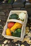 Basket with mini pumpkins. Several mini pumpkins in a basket Stock Photo