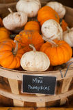 Basket With Mini White and Orange Pumpkins Royalty Free Stock Image