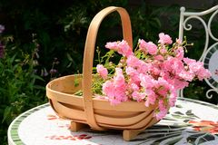 Basket of miniature roses Stock Photo