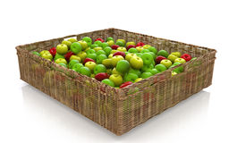 Basket of mixed apples. For processing trade scenes Stock Photo