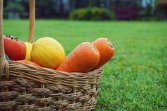 Basket of mixed fresh organic vegetable. At backyard Royalty Free Stock Images